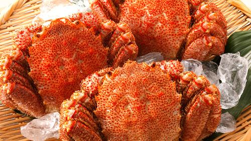 蟹の種類 毛ガニ 濃厚なカニ味噌が絶品