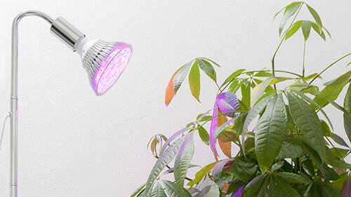 植物育成LEDライト パープル系 家庭菜園