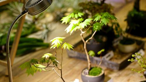 植物育成LEDライト ホワイト系 観賞用植物