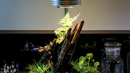 植物育成LEDライトとは